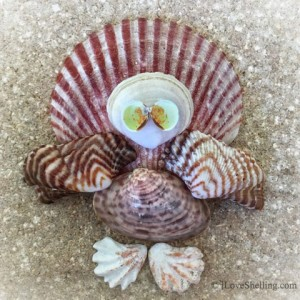 seashell-thanksgiving-turke